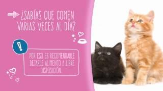 Download Purina Cat Chow Gatitos Video