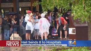 Download Baseball-Sized Hail Injures Zoo Visitors, Kills Two Zoo Animals Video