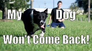 Download My Dog Takes Off and Won't Come Back! How to Train Your Dog Video