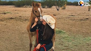 Download Baby Wild Horse Comes WAY Out Of Her Shell | The Dodo Video