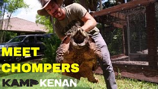 Download My Beautiful Alligator Snapping Turtle Video