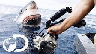 Download 35ft Great White Shark Lurking in 'The Kill Zone' | Super Predator Video