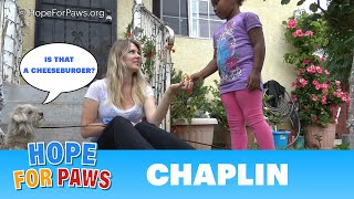 Download A young girl donates her cheeseburger to help us save a homeless dog. Video