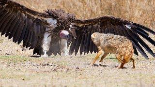 Download दुनियां के 10 सबसे खतरनाक चिड़ियाँ । Top 10 Most Dangerous Birds In The World | Video