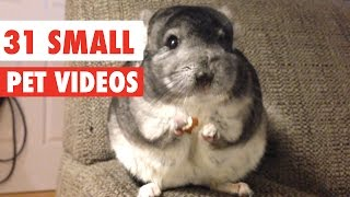 Download 31 Small Pet Videos Compilation 2016 Video