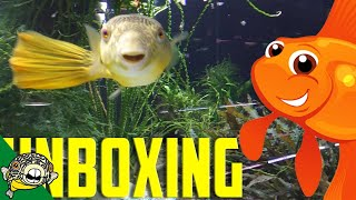 Download Unboxing Aquarium Fish. Goldfish Included! Quarantine Time Lapse. Video