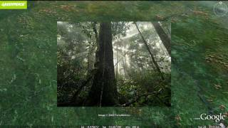 Download Greenpeace: Stopping Amazon Deforestation Video