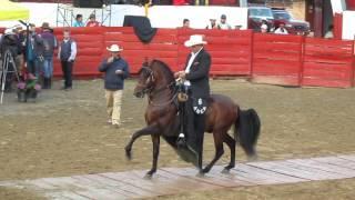 Download Campeonato de caballos trote y galope. Sibaté Cundinamarca Video