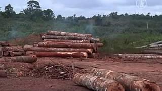 Download Леса Амазонки вырубают с пугающей скоростью (новости) Video