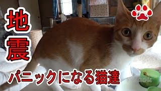 Download 鳥取地震。猫は地震を感知する?揺れる前に気が付いた猫達【瀬戸の猫部屋日記】There was an earthquake this daytime Cat'sroom Video
