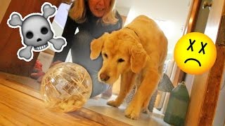 Download DOG vs NEW HAMSTER!!! (OH SH*T) Video