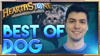 Download Best of Dog | Hearthstone Funny Lucky Fail Best Plays | Dog Hearthstone Moments Video