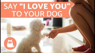 Download 7 Ways to Tell a Dog You Love Them Video