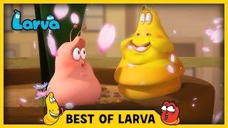 Download LARVA | BEST OF LARVA | Funny Cartoons for Kids | Cartoons For Children | LARVA 2017 WEEK 14 Video