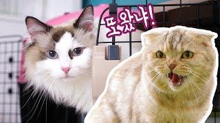Download 치순이를 일년만에 본 고양이들 과연 알아볼까?! 치순이와 콩 Video
