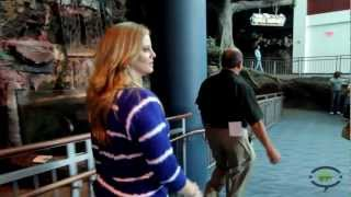 Download Inside look at Ripley's Aquarium of the Smokies in Gatlinburg, TN Video