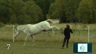 Download Horse vs man, Compilation Video