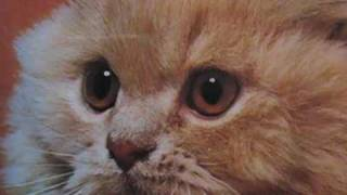 Download kittens inspired by kittens Video