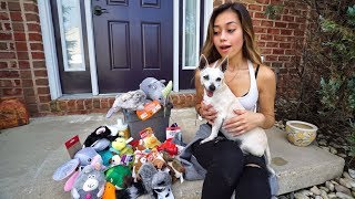 Download SURPRISING MY PUPPY WITH HER DREAM GIFTS! Video