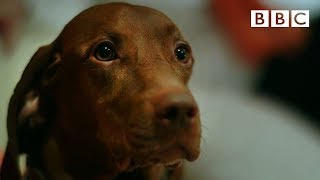 Download Can dogs tell the time? - Inside the Animal Mind: Episode 1 Preview - BBC Two Video