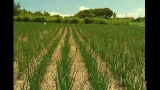 Download Management of beet armyworm (Spodoptera exigua - Hubner) Video