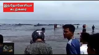 Download Tsunami Warning Video