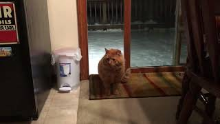 Download Feral / abandoned cat comes inside for the first time Video