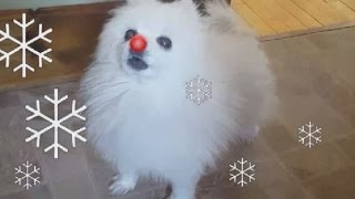 Download Gabe the red nosed Doggo Video