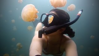 Download GoPro: Lost in Jellyfish Lake Video