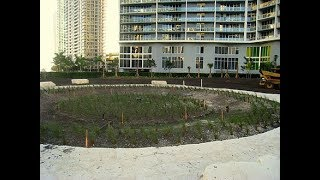 Download The Miami Mystery Circle & Lost City.....Found?? Video