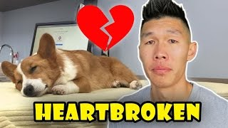 Download HEARTBROKEN OVER CORGI NEWS - Life After College: Ep. 509 Video