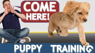 Download How to Train your Puppy to Come When Called NOW AND FOREVER! Video
