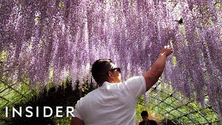 Download Why Japan Was The Best Place To Travel In 2018 Video