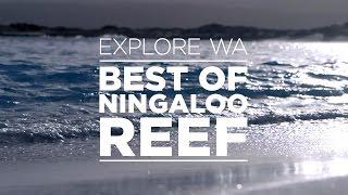 Download Explore Western Australia - Best of Ningaloo Reef Video