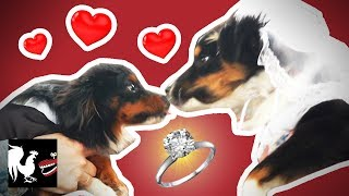 Download Dog Wedding: The Dumbest Thing We've Ever Done | RT Life Video