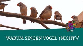 Download Warum singen Vögel (nicht)? – Seewiesen – #wonachsuchstdu Video