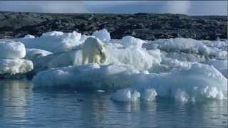 Download Walrus attacks kayak Video