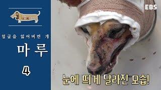 Download 세상에 나쁜 개는 없다 - 얼굴을 잃어버린 개 마루2 #002 Video