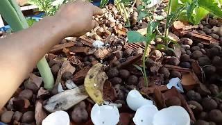 Download MANUTENÇÃO NO MINI SISTEMA DE AQUAPONIA Video