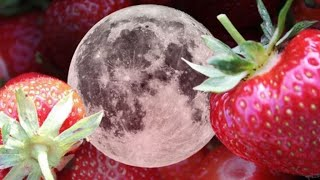 Download STRAWBERRY FULL MOON INLUENCES - ALL ZODIACS SIGNS 🍓🌕 Video