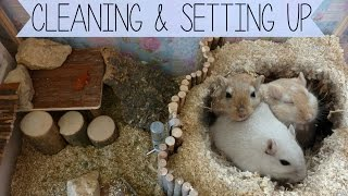 Download Cleaning & Setting up the Gerbils Cage Video