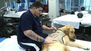 Download Therapy Dogs Help Wounded Warriors Heal Video