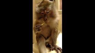 Download Monkey Gum Video