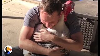 Download Guy Adopts A Turkey — Ends Up With A Turkey Family | The Dodo Video