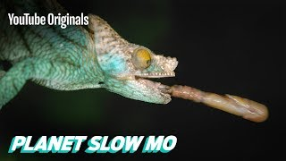 Download Fast Reptiles in Slow Mo Video