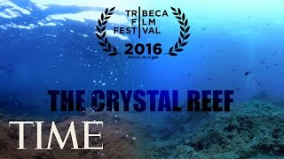 Download The Crystal Reef: How Climate Change Is Affecting Our Oceans | 360 | TIME Video