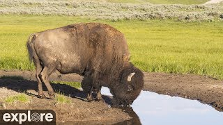 Download Bison Water Hole - Grasslands National Park powered by EXPLORE.org Video