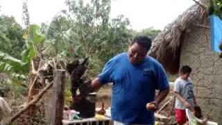 Download mata pollos Video