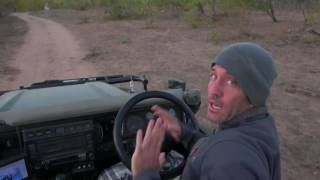 Download Baby Elephant Charging (rare) Safari Live Video