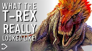 Download What Did The T-Rex REALLY Look Like? Video
